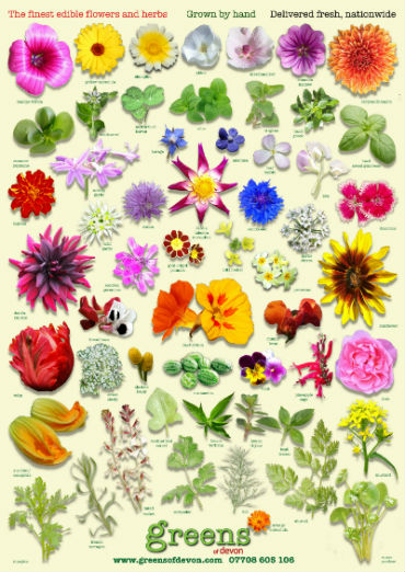 Identify edible flowers guide to edible flowers greens of devon edible flowers herbs identifier guide poster mightylinksfo
