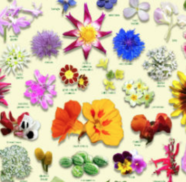 Edible Flowers Herbs Identifier Guide Poster