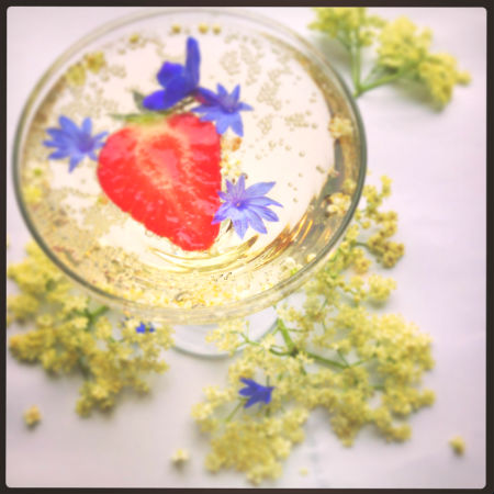 Elderflower champagne recipe