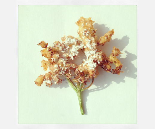 elderflower tempura fritter