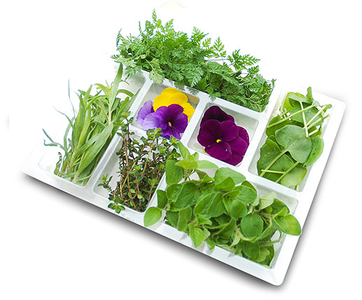 fresh herb selection